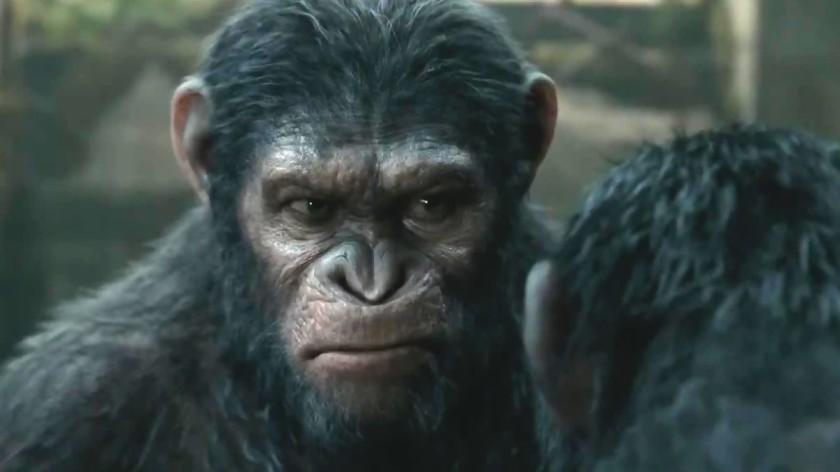 planete des singes affrontement