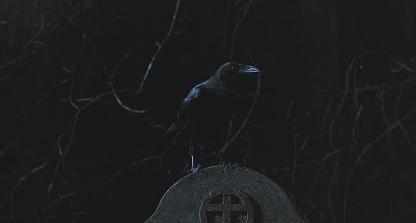 debut corbeau
