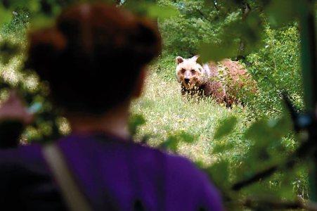 ours-renard-et-enfant