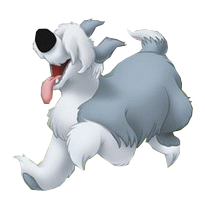 max chien