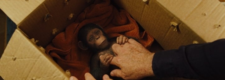 cesar bebe planete des singes origines