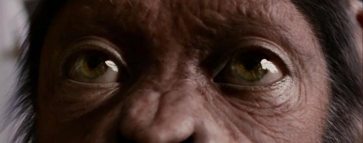 cesar visage planete des singes les origines