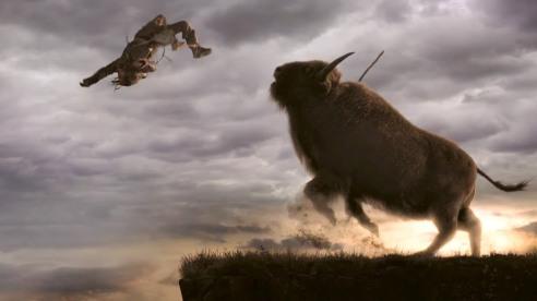 alpha keda percuté par un bison