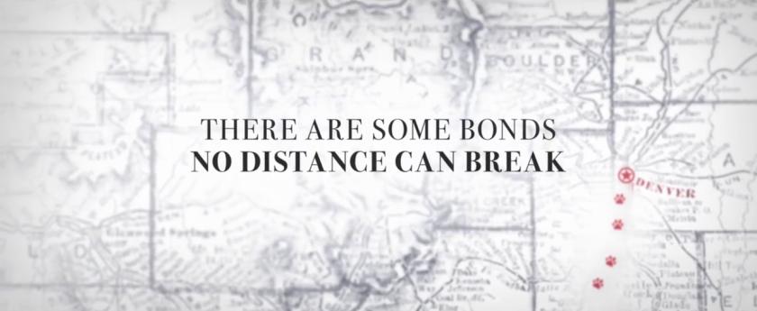 L'incroyable aventure de bella il y a des liens qu'aucune distance ne peut briser