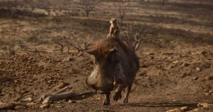 Le roi lion 2019 Timon et Pumbaa