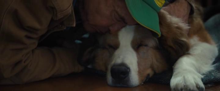 Mes autres vies de chien 2019 Ethan embrassant Bailey fatigué