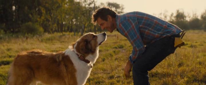 Mes autres vies de chien échange de regards entre Bailey et son maitre Ethan