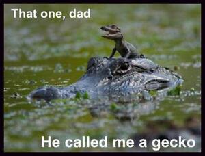Alligator funny picture