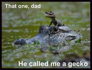 Alligator funny picture