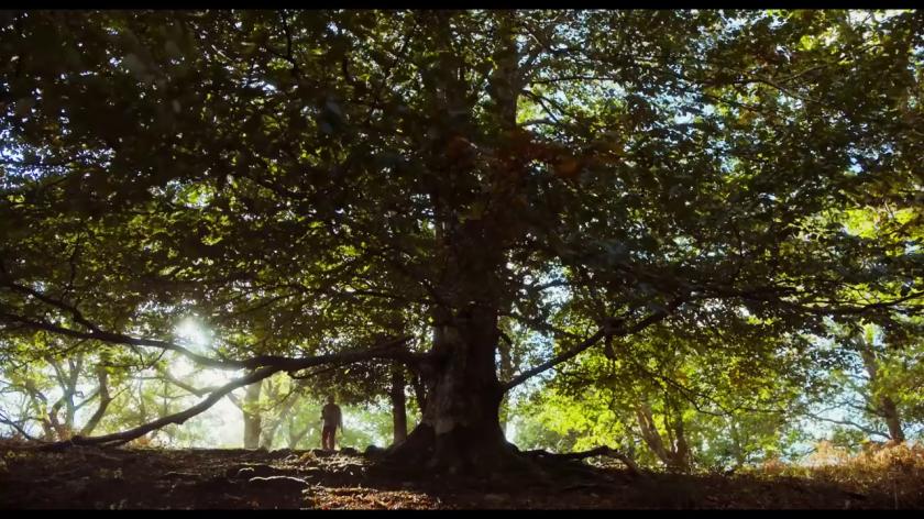 #JeSuisLà-un-homme-envoie-des-textos-en-marchant-à-coté-d'un-chêne
