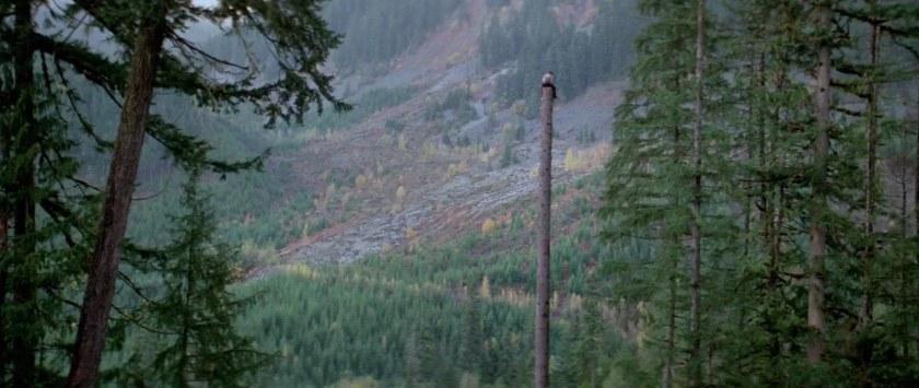 natty-gann-sol-gann-se-reposant-en-haut-d'un-arbre-coupé